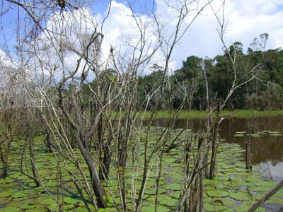 Bild des Regenwalds von Brasilien